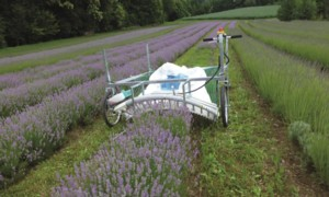 [Lavender Harvester-Push type Picture # 1]